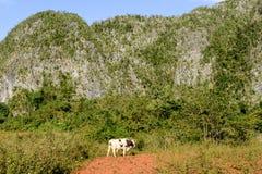 La valle di Vinales su Cuba Immagini Stock Libere da Diritti