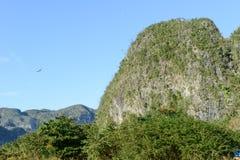La valle di Vinales su Cuba Immagini Stock