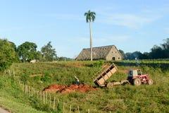 La valle di Vinales su Cuba Fotografia Stock