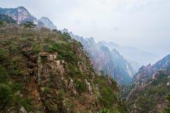 La valle ed i pini ad ovest del mare Fotografie Stock Libere da Diritti