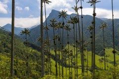 La valle scenica di Cocora con gli alberi della palma da cera di Quindio sulla priorità alta, in Colombia Immagine Stock