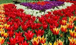La valle Tulip Festival di Skagit è un festival del tulipano nella valle di Skagit dello Stato del Washington È tenuto annualment Immagine Stock