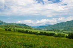 La valle verde alta sulle montagne in vista di chiaro cielo nel giorno di estate spangled con il paesaggio di fioritura dell'esta Fotografia Stock Libera da Diritti