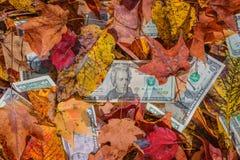 La valuta degli Stati Uniti mista dentro con l'albero di caduta va Fotografia Stock