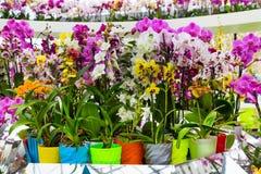 La variété de beaucoup orchidée différente fleurit dans le pot de fleurs Photo libre de droits