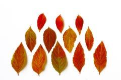 La variété de feuilles d'automne colorées a arrangé dans la rangée Image stock