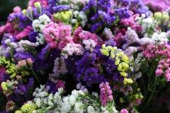 La variété de sinuatum ou de statice Salem de limonium fleurit dans des couleurs bleues, lilas, violettes, roses, blanches, jaune Image libre de droits