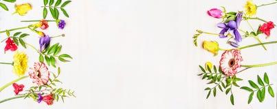 La variété, le ressort coloré et les fleurs d'été, cadre rayé, espacent le texte, bannière, carte Photographie stock