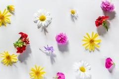La varia molla variopinta fiorisce creando il modello su fondo bianco Fotografia Stock Libera da Diritti