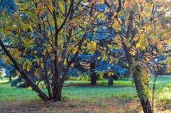 La varietà di colori di vegetazione nel parco Fotografie Stock Libere da Diritti