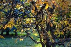 La varietà di colori di vegetazione nel parco Immagine Stock Libera da Diritti