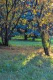 La varietà di colori di vegetazione nel parco Fotografia Stock Libera da Diritti