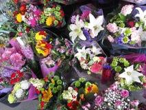 La varietà di fioritura di mazzo variopinto fiorisce su esposizione su un pomeriggio in anticipo della molla, Vancouver, 2018 Fotografia Stock