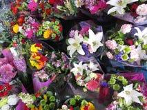 La varietà di fioritura di mazzo variopinto fiorisce su esposizione su un pomeriggio in anticipo della molla, Vancouver, 2018 Fotografia Stock Libera da Diritti