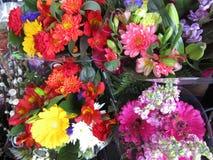 La varietà di fioritura di mazzo variopinto fiorisce su esposizione su un pomeriggio in anticipo della molla, Vancouver, 2018 Fotografie Stock