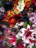 La varietà di fioritura di mazzo variopinto fiorisce su esposizione su un pomeriggio in anticipo della molla, Vancouver, 2018 Immagine Stock