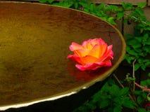 La vaschetta per i uccelli d'ottone con il galleggiamento è aumentato fotografia stock