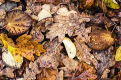 La vecchia caduta vibrante viva luminosa variopinta gialla marrone astratta del parco di autunno del fogliame delle foglie di aut Fotografia Stock Libera da Diritti