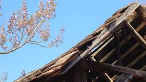 La vecchia casa abbandonata e l'albero Immagini Stock Libere da Diritti