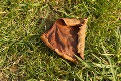 La vecchia foglia di acero asciutta sull'erba immagine stock