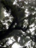 La vecchia foresta fotografie stock