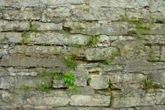 La vecchia parete della fortezza Fotografie Stock