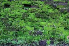 La vecchia parete di pietra ha coperto il muschio verde fotografie stock libere da diritti