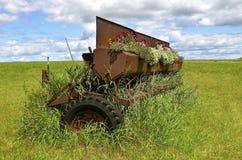 La vecchia scatola del seme di trapano del grano in pieno di fioritura fiorisce Immagine Stock Libera da Diritti