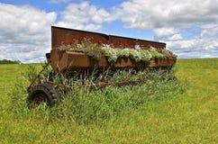 La vecchia scatola del seme di trapano del grano in pieno di fioritura fiorisce Immagine Stock