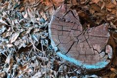 La vecchia struttura del tronco di albero, ha segato la vista superiore della sezione fotografia stock