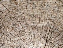 La vecchia struttura della corteccia in primo piano Fotografie Stock Libere da Diritti