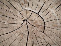 La vecchia struttura della corteccia in primo piano Fotografia Stock