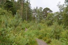 La vegetación alineó la trayectoria que miraba sobre un árbol de pino mayor Fotos de archivo