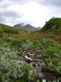 La vegetación de Islandia Foto de archivo