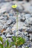 La vegetación de la tundra Imagenes de archivo