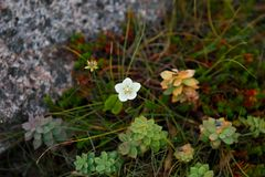 La vegetación de la tundra Imagen de archivo