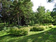 La vegetación densa en el parque Imagen de archivo libre de regalías