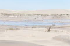 La vegetación en las dunas en Lagoa hace el parque nacional de Peixe fotografía de archivo