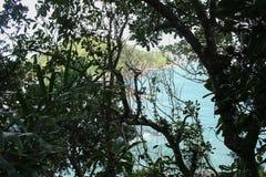 La vegetación en la playa fotografía de archivo libre de regalías