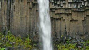 La vegetación y el basalto oscila así como las aguas que caen del Svartifoss, Islandia almacen de video