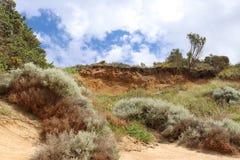 La vegetazione costiera si adatta a vento, a pioggia ed a sale Fotografie Stock