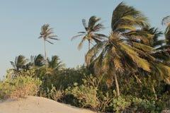 La vegetazione e la sabbia Fotografie Stock Libere da Diritti