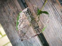 La vena della foglia che si trova sul bordo di legno Immagini Stock Libere da Diritti