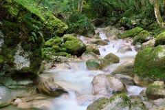 La Vence creek, near Le Sappey-en-Chartreuse Stock Photos