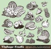 La vendimia da fruto colección Fotografía de archivo libre de regalías