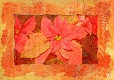 La vendimia labró la flor de la Navidad Fotografía de archivo libre de regalías
