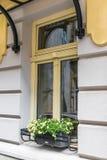 La ventana adornó la maceta Fotografía de archivo libre de regalías