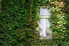 La ventana blanca en hiedra verde cubrió la pared Fotos de archivo