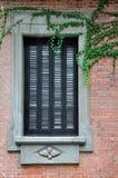 La ventana con exquisito graba y la planta de vid Fotografía de archivo libre de regalías