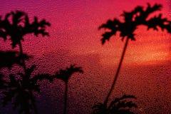 La ventana cubierta con lluvia cae en la opinión embotada del día del otoño de la palmera detrás del aire libre Foco principal bo Fotografía de archivo